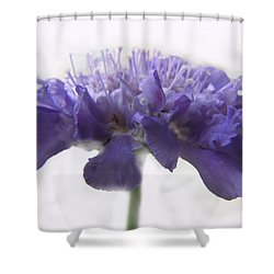 Shower Curtain featuring the photograph Purple Pincushin by Debbie Portwood