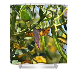 Purple Pink Green Chrysalis  Shower Curtain