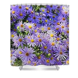 Purple Reigns Shower Curtain by Joan Carroll