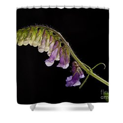 Shower Curtain featuring the photograph Purple Vetch by Art Whitton