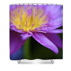 Purple Water Lily Petals Shower Curtain by Kicka Witte