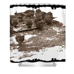 Quail Having Lunch Shower Curtain by Will Borden