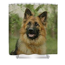 Queena - German Shepherd Shower Curtain by Sandy Keeton