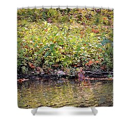 Quiet Moment Shower Curtain by Maria Urso