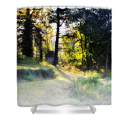 Quiet Morning In The Woods Shower Curtain by Bill Cannon