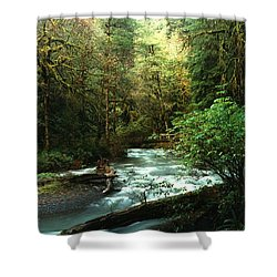 Quineault Rain Forest Shower Curtain by Rick Frost