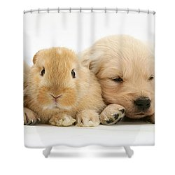 Rabbit And Puppies Shower Curtain by Jane Burton