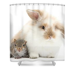 Rabbit And Squirrel Shower Curtain by Mark Taylor