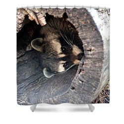 Shower Curtain featuring the photograph Raccoon In Hiding by Kathy  White