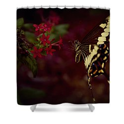 Radiant Swallowtail Shower Curtain
