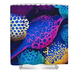 Radiolarians Shower Curtain by Omikron