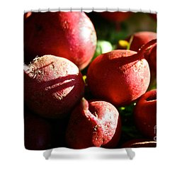 Radishes At Sunrise Shower Curtain by Susan Herber