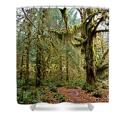 Rain Forest In Fall Shower Curtain