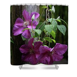 Rain Kissed Clematis  Shower Curtain