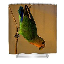 Rainbow Bird Shower Curtain by Syed Aqueel