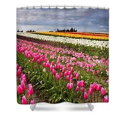 Rainbow Fields Shower Curtain by Mike  Dawson