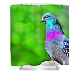 Rainbow Pigeon Shower Curtain