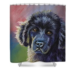 Rainbows And Sunshine - Newfoundland Puppy Shower Curtain
