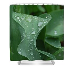 Shower Curtain featuring the photograph Raindrops by Aimee L Maher Photography and Art Visit ALMGallerydotcom