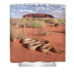 Ramsays Python Aspidites Ramsayi Shower Curtain by Michael & Patricia Fogden