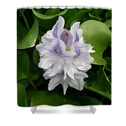 Shower Curtain featuring the digital art Rare Hawain Water Lilly by Claude McCoy