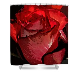 Rare Red Rose Shower Curtain by Phyllis Denton