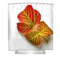Raspberry Leaves In Autumn Shower Curtain by Sean Griffin