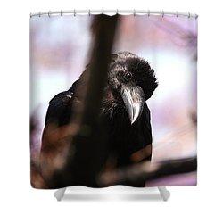 Raven Outside My Window Shower Curtain