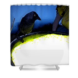 Raven Reflecting  Shower Curtain by Colette V Hera  Guggenheim