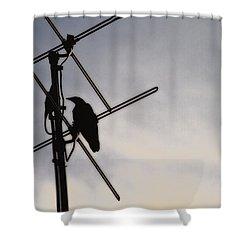 Ravens Perch Shower Curtain by Karol Livote
