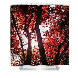 Reaching For Glory - Afternoon Light Shower Curtain