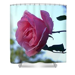 Shower Curtain featuring the photograph Reaching For Sunlight by Kathy  White