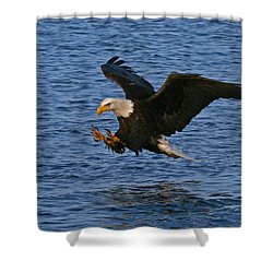Shower Curtain featuring the photograph Ready To Strike by Doug Lloyd