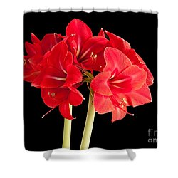 Shower Curtain featuring the photograph Red Amaryliss by Les Palenik