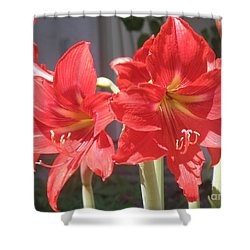 Red Amaryllis Shower Curtain by Kume Bryant