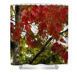 Shower Curtain featuring the photograph Red And Green Prior X-mas by Michael Frank Jr