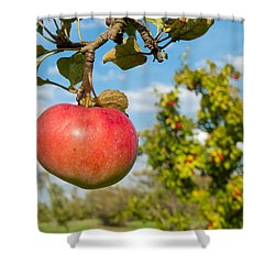 Red Apple On Branch Of Tree Shower Curtain by Matthias Hauser