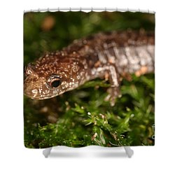 Red-backed Salamander Shower Curtain by Ted Kinsman
