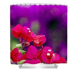 Red Bougainvillaeas Shower Curtain by Ron Dahlquist