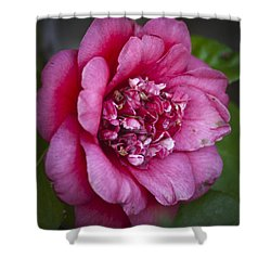 Red Camellia Shower Curtain by Teresa Mucha