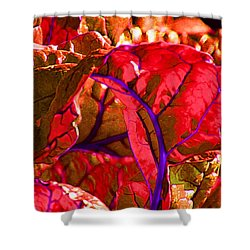 Red Chard Shower Curtain by Rory Sagner