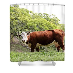 Red Cow Shower Curtain