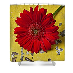 Red Daisy And Old Key Shower Curtain by Garry Gay