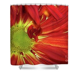 Red Daisy Too Shower Curtain by Sabrina L Ryan