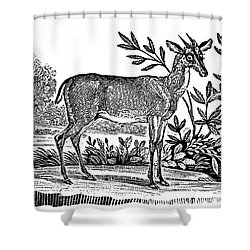 Red Deer Shower Curtain by Granger