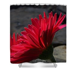 Shower Curtain featuring the photograph Red English Daisy by Joe Schofield