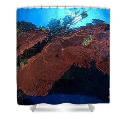 Red Fan Cora With Sunburst, Papua New Shower Curtain by Steve Jones