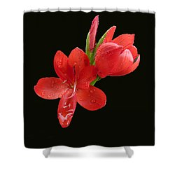 Shower Curtain featuring the photograph Red Flower by Lynn Bolt