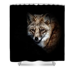 Red Fox Shower Curtain by Karol Livote
