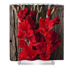 Red Gladiolus Shower Curtain by Garry Gay